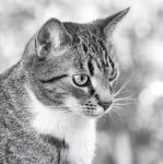 just a cat VIII by Wilithin