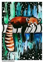 red panda by eamanee