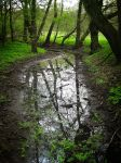 Mirror of Wilderness by Tobey442