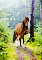 Brother by Exhilarations
