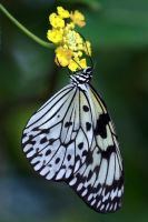 .White and yellow. by Gothic-Enchantress