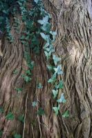 Textures - Ivy Trunk by Monumnas-Stock