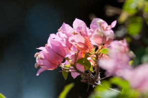 Flowers and Bokeh  o2 by TiRiSh