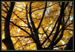 yellow autumn by syccas