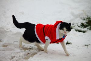 Santa Kitty. by pasofino6