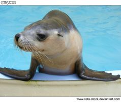 Seal 7 by Ceta-Stock