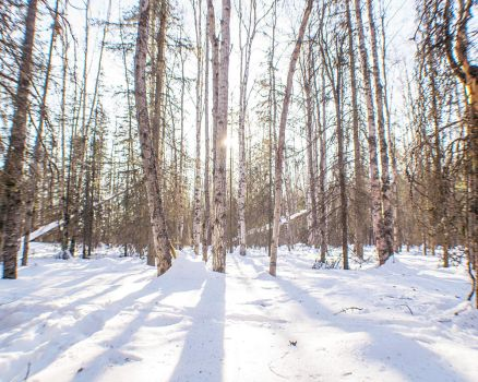Winter Forest II by MkshftChrstian