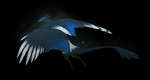 May 3 black billed magpie by oukamiyoukai45