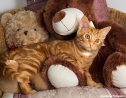 Amber and teddies by AngiWallace