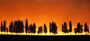Tuscan Tree Line by Declan11