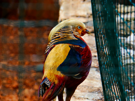 Pafos Zoo -18- by IoannisCleary