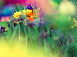 Les couleurs de la nature by Somebody--else