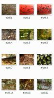 Tree Trunk Pack by FMX-Resources
