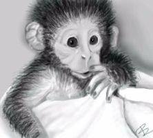 baby monkey by pandabarrie