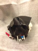 Darth Pig Star Wars Guinea Pig Isis by mch2020moehunt
