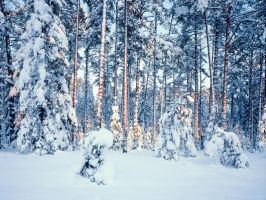 Winter time in forest by RomGams