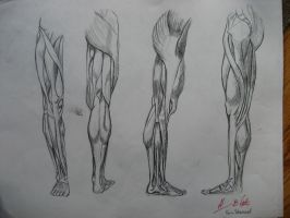 Muscle structure - Leg by lynxmom