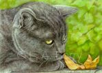 Big Head Fred Russian Blue Cat by bigcatdesigns