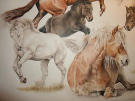 part of commission portrait of 6 horses by BunkhouseStudio