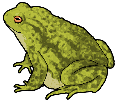 Toad  Clipart by MisterBug