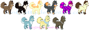 Collab- Dog Adopts [NAME YOUR PRICE] by Catty-Adopts