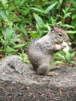 Squirrel eating a cracker by thiselectricheart