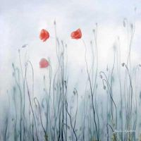 Frosty poppy flowers by Ele-Art