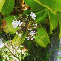 White flowers. by Cattrooper