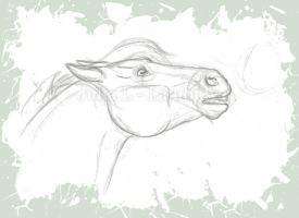 Horse sketch by Lambidy