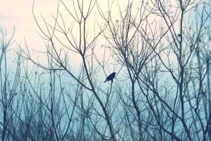 Alone by Sprout-Photography