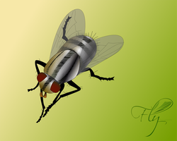 Fly _ Mosca by raspete
