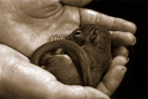 Baby Squirrel by mrparrish