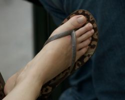 Long Toes in Brown Flip Flops by Feetatjoes