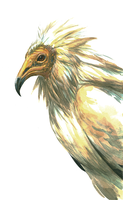 egyptian vulture by anticline-art