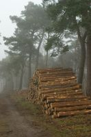 Woodcutters area 1 by steppelandstock