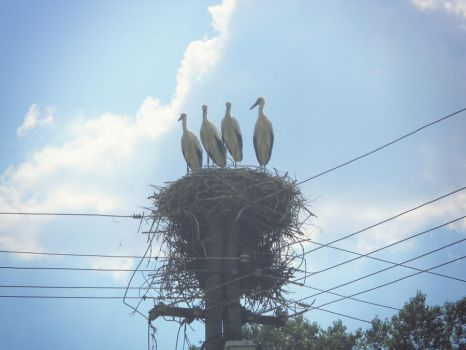 storks :) by love-is-magic