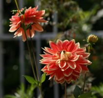 awesome dahlias with insect by ingeline-art