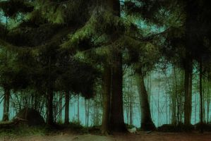 forest 7 by Amalus