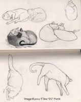 Feline sketches by mirroreyesserval