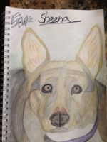 My dog sheena by EJJetsetter