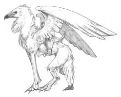 Egyptian Vulture Gryphon by NapalmPrincess