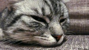 Sleepy cat by BHandersen