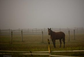 Horse in Fog by dark4Maxine