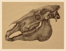 horse skull by cassie-f