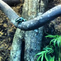 InstaQuarium: Tiny Poisonous Frog - The Ribbiting by saourealis