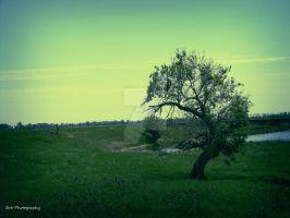 Shades Of Green by erbphotography