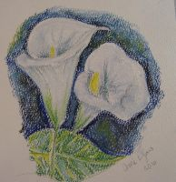 Calla Lilly - Pastels by carriephlyons