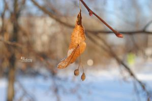 The branches of winter. by Akatamy