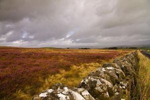 Northumberland Scene by parallel-pam