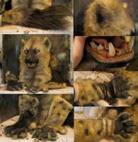 Xander the spotted 'yeen gloves tail and closeups! by Crystumes